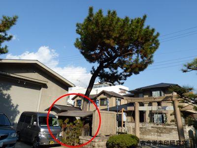 魚崎八幡宮神社神依松の隣の松