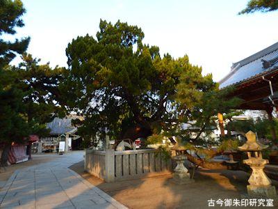 高砂神社、御神木のイブキ