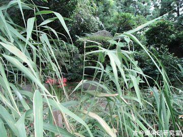 居多神社片葉の葦