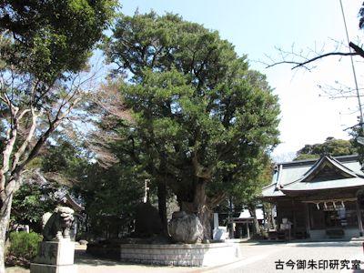 鶴谷八幡宮御神木