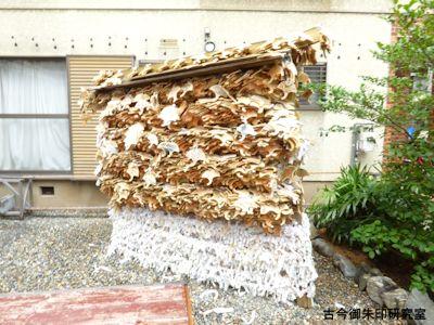 御金神社銀杏の絵馬